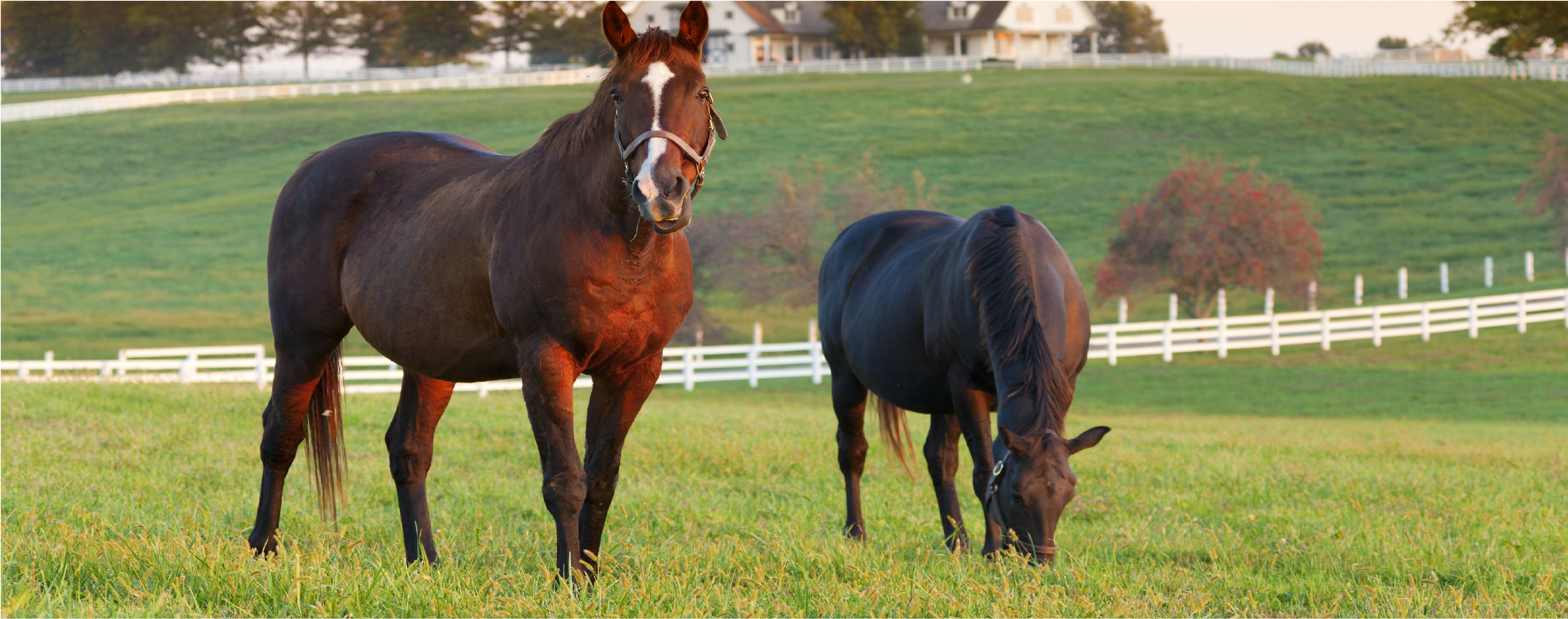 Equine Vet Services our surgery facilities in invercargill