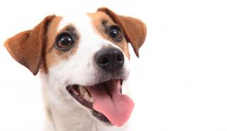 your dogs teeth and dentistry care