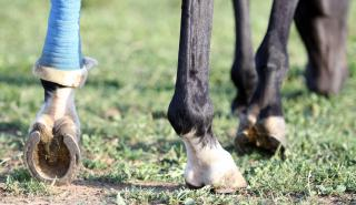 How to treat a horses wound