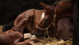 Mare and newborn foal