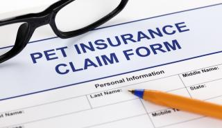 Pet Insurance NZ - why you need to consider insurance for your pets