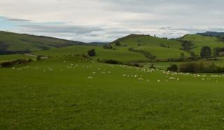 Sheep and Beef worm control sustainability