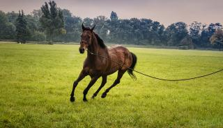 horses with oxidative stress